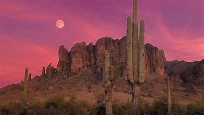 Desert Sunset Cactus Scenery Arizona Desktop Backgrounds