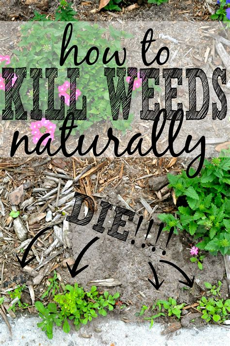 3 killer ways to get rid of weeds naturally home