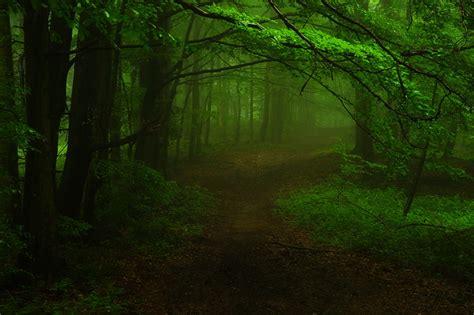 misty woods flickr photo sharing