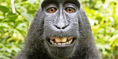 lustige tier selfies affiger streit um selfie treibt