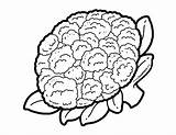 Cauliflower Coloring Vegetable Drawing Kalafior Drawings Colouring Dzieci Dla Fruit Blackline Vegetables Foodhero Colorear Doodle Imagenes Schoolart Found Carrots Kolorowanka sketch template