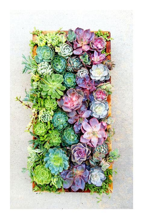 vertical succulent garden the rikrak studio my favourite things vertical succulents wall garden