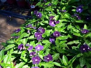 Blumen Für Schattige Plätze : ber ideen zu schattengartenpflanzen auf pinterest ~ Michelbontemps.com Haus und Dekorationen