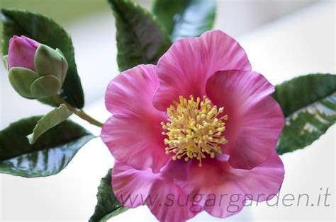 are camellia flowers edible 20 best images about fondant camelia on pinterest cakepops flower and cakes