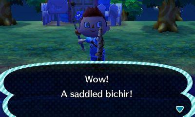 saddled bichir animal crossing wiki fandom
