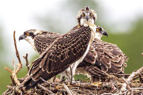 important bird areas  connecticut audubon