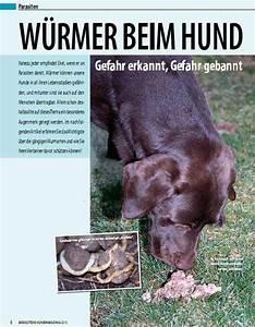 Hund Würmer Hausmittel : spitzliebhaberverein w rmer beim hund ~ Frokenaadalensverden.com Haus und Dekorationen
