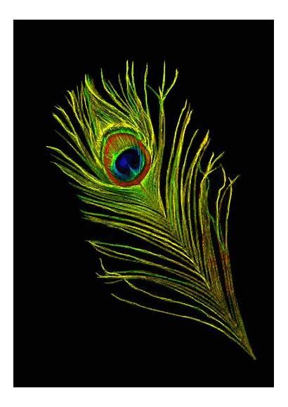 Peacock Subscription Smartartbox Krishna Feathers Painting Supply