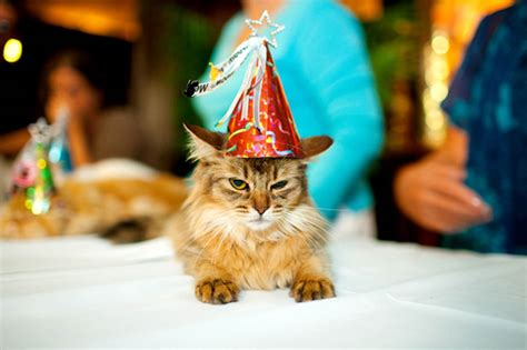 cat birthday cats in hats today com