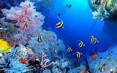 Aquarium Animated Aqua Fish Desktop Wallpapers Wallpapersafari