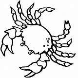 Crab Pages Coloring Printable sketch template