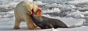 Polar Bear Standing Up Next To Man | www.pixshark.com ...