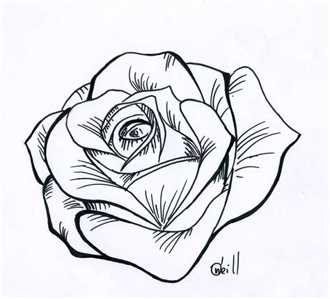 traditional rose  drawing  drawing rose cliparts