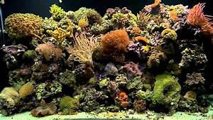 Coral Reef Aquarium Background Aquarium Design Ideas