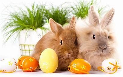 Easter Bunnies Background Downloads