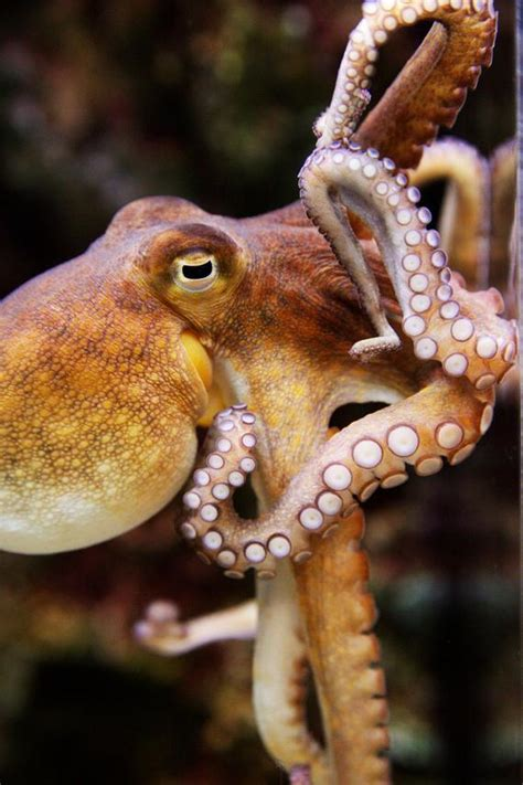 Fine Art Photography Octopus Animal Marine