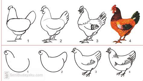 lukisan ayam mudah cikimm