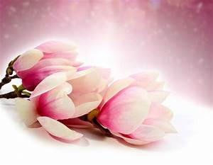Blossom 5k Retina Ultra HD Wallpaper and Background Image ...
