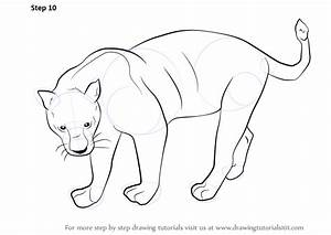 Learn How to Draw a Black Panther (Wild Animals) Step by ...