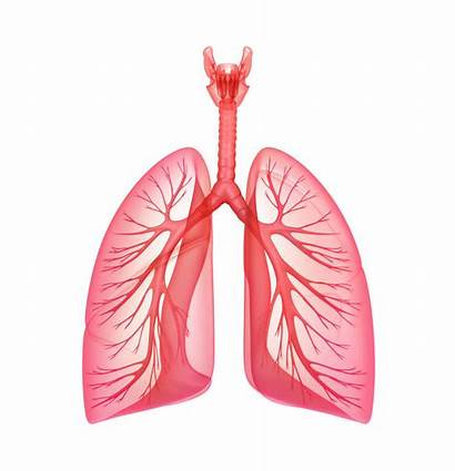 Lungs Lung Capacity Increase Pulmonary System Exercise