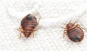 bed bug exterminator vancouver call for free quote With bed bugs vancouver