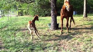 Newborn horse stands up for the first time - YouTube