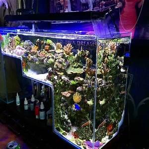 Süßwasserfische Fürs Aquarium : die besten 25 meerwasser aquaristik ideen auf pinterest ~ Lizthompson.info Haus und Dekorationen