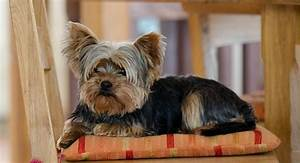 Cute Male Dog Names For Yorkies - 4k Wallpapers