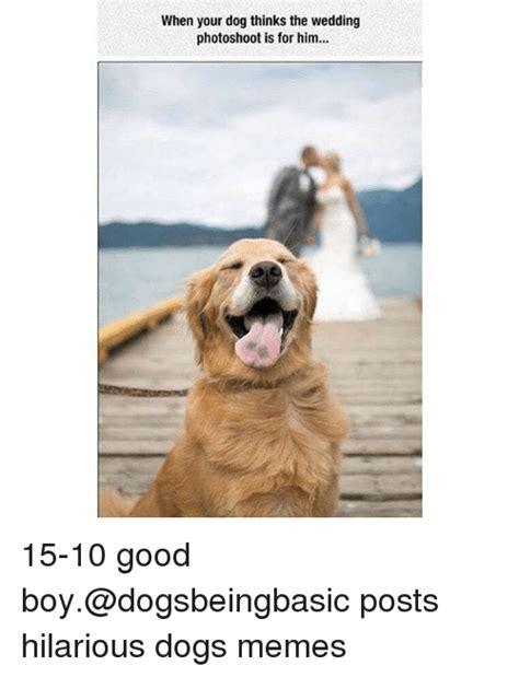 memes  dogs memes dogs memes
