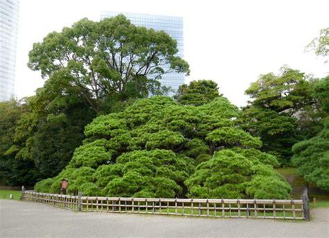 Japanischer Garten In Tokio by Einzigartig Hamarikyu Garten In Tokio