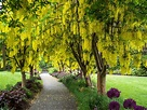 Explore VanDusen Botanical Garden in the heart of ...