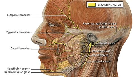 Dental, Facial Pain, Posture Connection