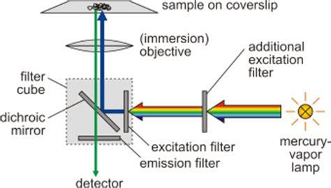 introduction fluorescence microscopy soft matter