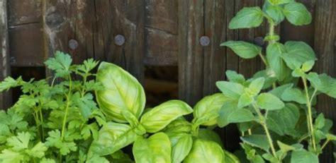 herbes aromatiques en cuisine les herbes aromatiques en cuisine astuces une culture en intérieur a vogel