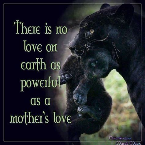 animal mother quotes quotesgram