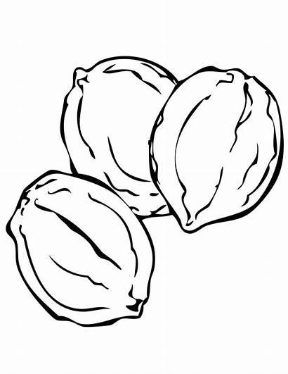 Coloring Colorat Walnut Toamna Fructe Nuci Nuts