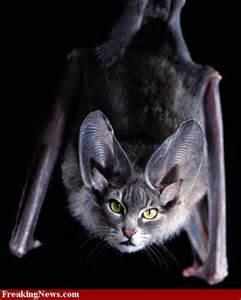 bat cat photoshop cat creatures
