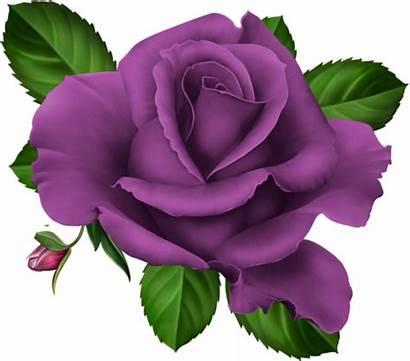 Flowers Clipart Flower Purple Clip Pink Roses