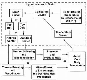 Homeostasis Body Temperature