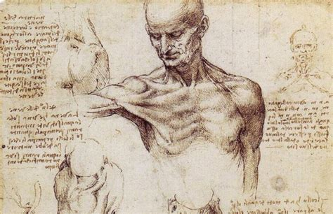 anatomical drawings da vinci great   infallible