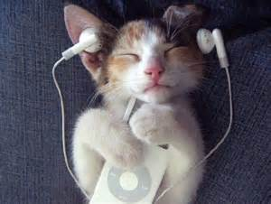 cat songs for cats bibliolore