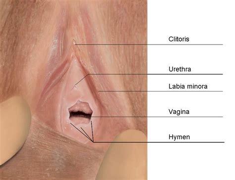Gambar Rahim Wanita Yang Normal The Hymen Sexinfo Online