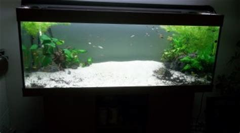 combien de poisson dans un aquarium de 60l 28 images combien de cardinalis dans un aquarium