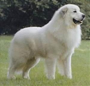 Ecole Elémentaire de Samoëns (74) - Les 1000 métiers du chien