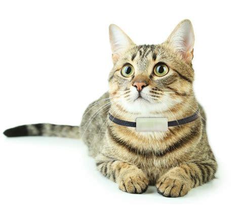 weenect finally throws cats  bone   gps kitty tracker