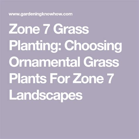 zone grass ornamental grasses types various learn plants planting