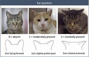 Facial Expressions Of Cats Reveal Their Inner Moods  Study