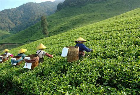 l histoire de la cuisine le thé de chine des grands crus mythiques guide du thé