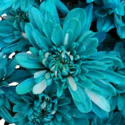 bulk baby s breath turquoise blue flowers