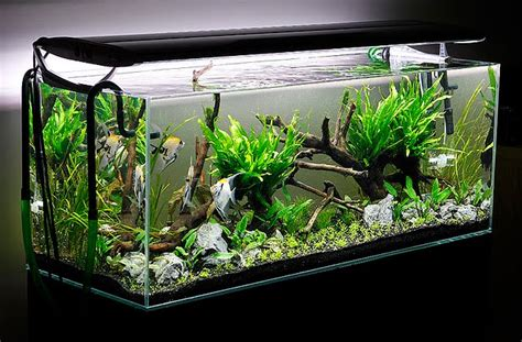 aquarium design a two sided live planted aquarium layout live planted aquariums